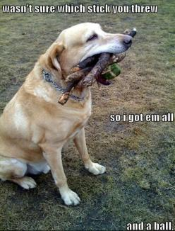 Hahahahahahaha I could see Buddy doing this when he was more into fetch.: Funny Animals, Dogs, Pet, Funny Stuff, Humor