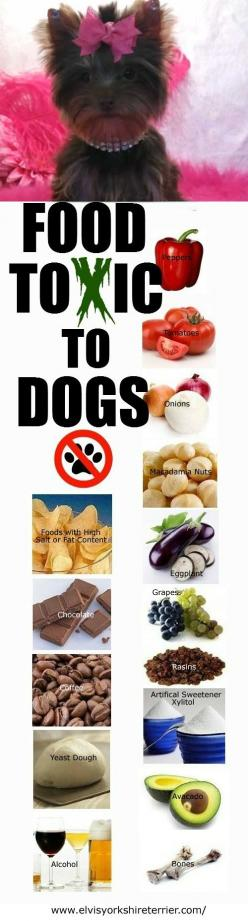 Here are some foods that are highly toxic for dogs save your canine friends from these: Food Toxic, Toxic Food, Dogs, Pet Care, Dog Food, Pets, Fur Babies, Foods Toxic