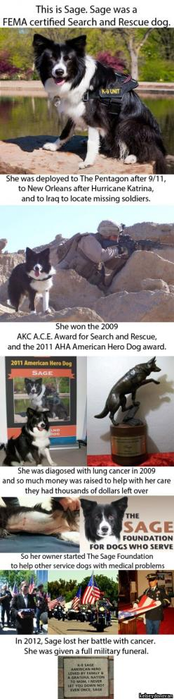 Hero. True testament of mans best friend and heart of gold.: Awesome Dog, Military Dog, Canine Hero, Military Working Dog