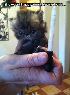 Hilarious images of the week -55 pics- She Wasn't Happy About Her Medicine: Funny Animals, Face, Kitten, Grumpy Cat, Kitty, Poor Baby