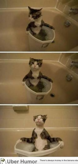 hot tub.... lol so cute: Animals, Cat Bath, Funny Cats, Crazy Cat, Hot Tubs, Kitty, Cat Lady