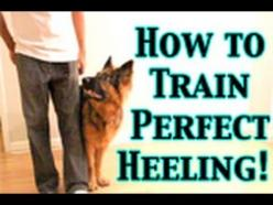 How to train any dog to heel perfectly - http://www.thehowto.info/how-to-train-any-dog-to-heel-perfectly/: Dogs Training, Agility Training For Dogs, German Shepherd Puppy Training, German Shepherds, Training Dogs, Dog Training Heel, Dog Agility Training,