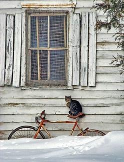 http://pressenetwork.blogspot.com/2012/09/holger-wiefel-zeit-fur-veranderung_14.html  Cat on a bike....,3: Cats, Kitty Cat, Animals, Bike, Snow, Winter Wonderland, Windows, Photo, Bicycle