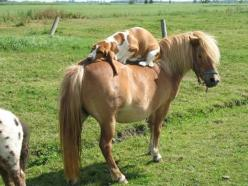 I don't know even where to start with this one...: Animals, Friends, Dogs, Horses, Ponies, Pet, Funny, Bassethound