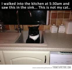i know i already pinned this at some point, but it seriously cracks me up! thinking of a random cat, randomly sitting in one's sink... LOL: Cats, Animals, Giggle, Funny Cat, Funny Stuff, Humor, Sink
