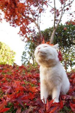 I love the smell of fall: Cats, Beautiful Cat, Animals, Fall Leaves, Autumn Leaves, Pets, Feline, Kitty
