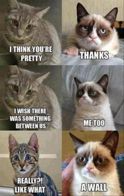 It's so funny I just love grumpy cat: Cats, Animals, Grumpycat, Funny Cat, Funny Stuff, Humor, Funny Animal, Grumpy Cat