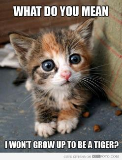 "Kitten got the bad news - Cute kitten making disappointed face: ""What do you mean I won't grow up to be a tiger?"": Kitty Cats, Animals, So Cute, Pets, Cute Cat, Adorable Kitten, Things, Cute Kittens"