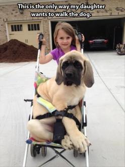 look at the paws on that puppy!!: Animals, Dogs, Poor Dog, Daughter, Funny Animal, Walk, Friend, Kid