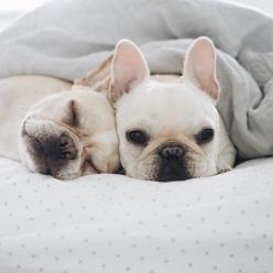 Love is....waking up like this!: Cuties, French Bulldogs, Bulldogs Cuddling, Doggies, Puppys, Adorable Puppies, Frenchies Animals, Furry Friends