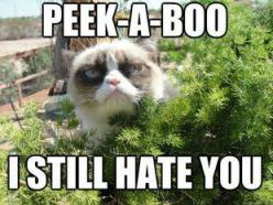 Naww. Ur irrelevant. Indifference is the feeling. And relief. Relief that ur gone.: Cats, Animals, Grumpycat, Funny Stuff, Humor, Grumpy Cat, Peek A Boo