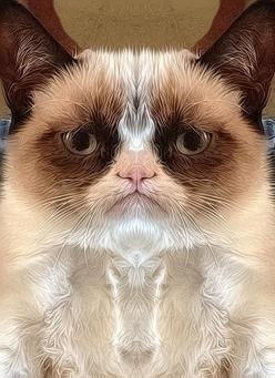 Now this is Photoshop... - Grumpy Cat: Cat Art, Silk, Grumpycat Fanart, Cat Grumpycat, Fanart This, Grumpycat Baby, Grumpy Cat, Cats Baby, Baby Cats