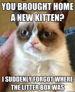 Oh, Grumpy Cat, don't be like that!: Funny Grumpy Cat Meme, Kitten, Cat Grumpycat, Funny Quotes Grumpy Cat, Funny Grumpy Cat Quotes, Grumpy Cat Funny Quotes, Grumpycat Humor, Even Grumpycat, Classic Grumpycat