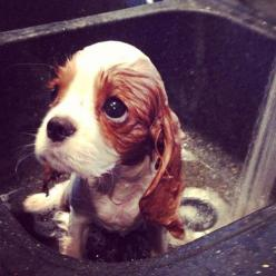 Oh my goodness -- I could never bathe him!: Face, Puppies, Animals, Dogs, Pet, Puppys, Baby, Bath Time, Eye