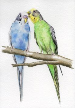 Parakeet bird painting budgie painting 5x7 by Earthspalette, $35.00: Bird Paintings, Watercolors, Art, Budgies Parakeet, Birds, Bird Parakeets, Animal