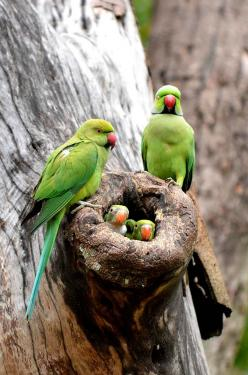 Parrots | Colombo, Sri Lanka.: Nature, Parrot Family, Parrots, Beautiful Birds, Families