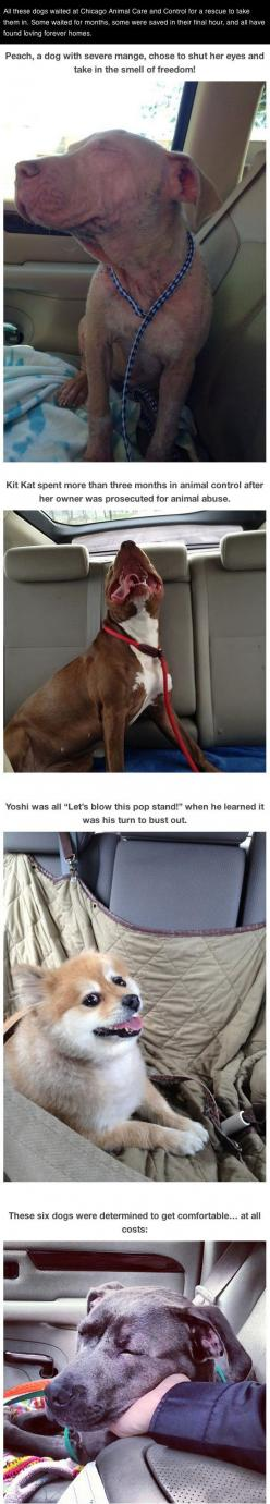 Photos of dogs taken after leaving the shelter and getting in the car… - Adopt, don't shop!: Animals, Dog Photos, Cars, Shelters, Rescued Dogs