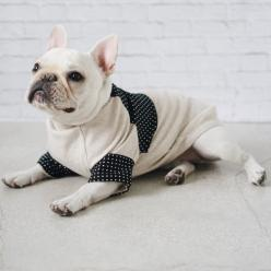 Polly, a French Bulldog, in a Pipolli Folded Sleeve Sweater.: Sweaters, French Bulldogs, Bulldog Fancés, Folded Sleeves