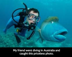 Priceless encounter // funny pictures - funny photos - funny images - funny pics - funny quotes - #lol #humor #funnypictures: Photos, Face, Animals, Fish, Funny Picture, Funny Stuff, Pictures, Humor