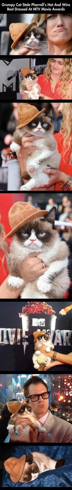 Random Pictures Of The Day - 50 Pics: Movie Awards, Mtv Awards, Funny Quotes, Best Dressed, Cat Stole, Grumpy Cat, Mtv Movie, Has, Animal