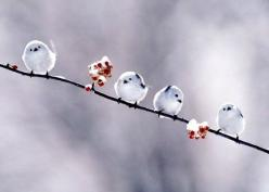 snow birds.: Snow Birds, Animals, Winter, Nature, Little Birds, Beautiful, Things, Photo