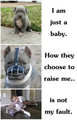 stop animal cruelty ...: Animals, Dogs, Pet, Animal Abuse, So True, Pittbull
