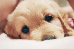 """that face screams """"come snuggle"""": Puppies, Animals, Dogs, Golden Retrievers, Pets, Puppys, Adorable, Box"""