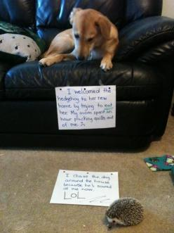 The best dog shame EVER!!!!!!!: Animals, Dog Shaming, Pet, Funny Stuff, Funny Animal, Hedgehogs