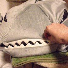 The cat's face make this so funny (gif): Cats, Shark Food, Gifs, Funny Gif, Sharks, Scary Monsters, Cat Lady, Animal