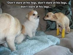 The longer you look at the one with the casts, the funnier it gets. Lol: Giggle, Animals, Dogs, Funny Stuff, Humor, Legs