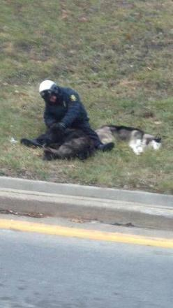The officer stayed in the cold with the clearly exhausted dogs, keeping them company while they waited for members of the local animal shelter to arrive.: Animal Heroes, Police Officer, Dogs In Shelters, Animals Dogs, Exhausted Dogs, Helping Animal Shelte