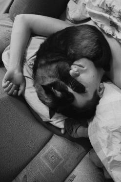 This cat is unquestionably at peace and secure!: Cats Cats, Face, Animals, Cat Nap, Black Cats, Pet, Kitty