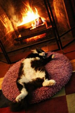 This is exactly like my 'Bizzy' cat!  He looks  like this guy, and he sleeps like this!  No shame!  ;): Cats, Kitten, Animals, Good Life, Sleep, Kitty, Cozy Fireplaces