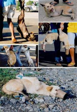 This is just unbelievable cruelty & torture... It'is how animals are treated in several Asian countries, for food and export -- fur to the USA...: Animal Suffers, Animals, Animal Rights, Stop Animal Cruelty, Human
