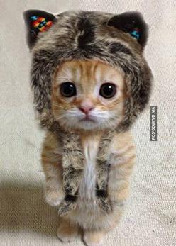 This little kitty is so cute !!! With his big eyes and his tuque, he seems so superficial. But even if it's not a real kitten, I don't really like when people dress up there animals because he surely don't want to wear this and of course, your