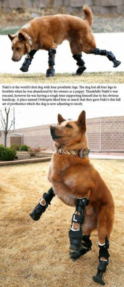 This s so sad, how could someone do that to a poor animal that looked up to that one person, and that one person who put this dog through trauma!!<3: Animals, Dogs, Humanity Restored, Awesome, My Heart, Puppy, Prosthetic Legs