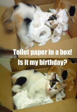 Toilet paper in a box! Is it my birthday?: Birthday, Animals, Funny Cats, Crazy Cat, Box, Funny Animal, Kitty, Cat Lady, Toilet Paper