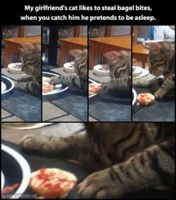 Too funny! more funny pics on facebook: https://www.facebook.com/yourfunnypics101: Animals, Giggle, Funny Cat, Crazy Cat, Funny Animal, Kitty, Cat Lady