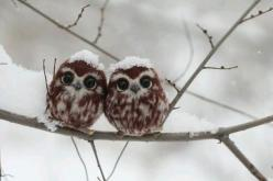 Two happy little owls!- http://www.pixable.com/share/615gQ/?tracksrc=SHPNAND3&utm_medium=viral&utm_source=pinterest: Babies, Animals, Little Owls, Sweet, Babyowls, Baby Owls, Baby Animal, Cute Owl, Birds