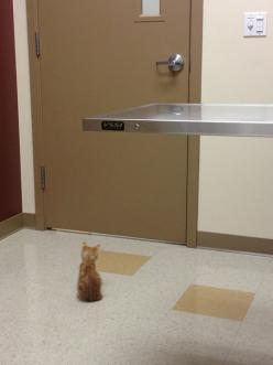 Waiting for the vet - Imgur: Cats, Animals, Stuff, Kitty Waiting, Funny Pictures, Pet, Kittens, Vet Tech, Smile