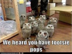 We heard you have tootsie pops!?  A One... A two-HOO... A tha-three...  #LetsGetWordy  #Hooters: Tootsie Pops, Animals, Tootsiepops, Funny Stuff, Harry Potter, Humor, Things, Owls