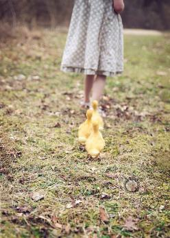 We keep going back and forth about ordering more chickens and ducks because we are going to be dead busy this Spring but I think we are going to end up getting them!: Animals, Sweet, Girl, Baby Ducks, Farm Life, Country Living, Country Life, Follow Me, Sp