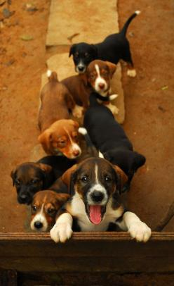 When do you start giving us treats??: Animals, Puppies, Dogs, Puppy Love, Pet, Play, Puppys, Friend
