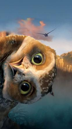 """Who is smarter, prettier, or can fly faster and higher: black birds, blue birds, purple birds, parrots, or owls?!  The wise ole owl says, """"Yada yada yada, whooo gives a hoot!"""": Animals, Wallpaper, Funny, Peek A Boo, Birds, Owls"""