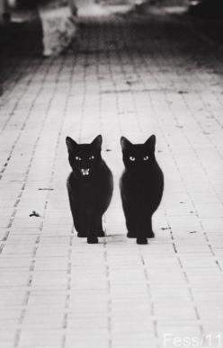 wrouuah!: Twin, Animals, Kitty Cat, Meow, Black Cats, Things, Blackcats, Friend