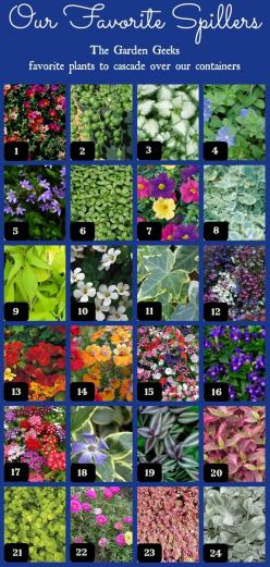 1. Purslane, 2. String of Pearls, 3. Deadnettle, 4. Dwarf Morning Glory, 5. Fan Flower, 6. Pilea, 7. Calibrachoa, 8. Licorice Vine, 9. Sweet Potato Vine, 10. Bacopa, 11. Ivy, 12. Lobelia, 13. Nasturtium, 14. Nemesia, 15. Petunia, 16. Torenia, 17. Verbena,