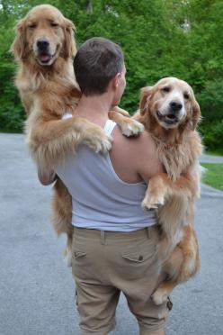 10 big dogs that like being held like babies :): Babies, Animals, Friends, Golden Retrievers, Pets, Puppy, Big Dogs