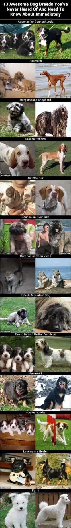 13 Awesome Dog Breeds You've Never Heard Of: Awesome Dogs, Animals, 13 Awesome, Heard, Breeds You Ve, 13 Dog, List Of Dog Breeds