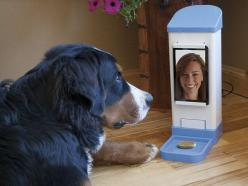 13-Year-old Invents Product for Dogs with Separation Anxiety (article  video): Separation Anxiety, Treats, Dogs, Pets, Icpooch, Products, Internet Pet, Animal