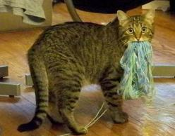 15 Animals That Have Committed Huge Pinterest Fails: Cats, Animals, Funny Cat, Knitting, Funny Stuff, Funnies, Funny Animal, Dog, Kitty